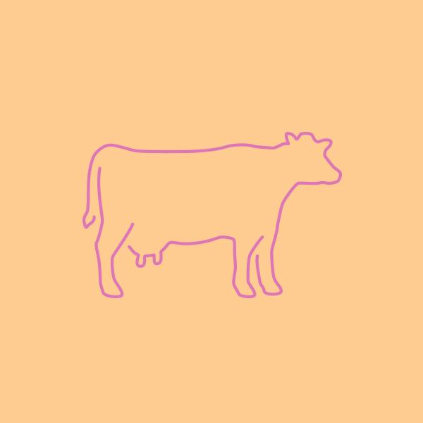Cow_DesignAhoy.jpg