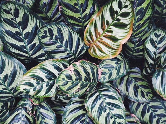 Full of inspiration after a trip to the conservatory! 🌿🌵 #nooceanco #surfacedesign #patterninspiration #patterndesign #textiledesign #pattern #dspattern