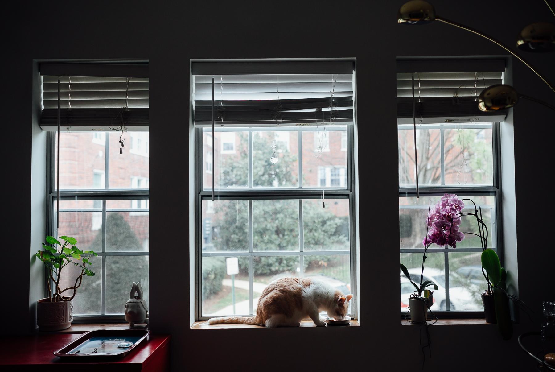 In-home photography Arlington VA-2.jpg