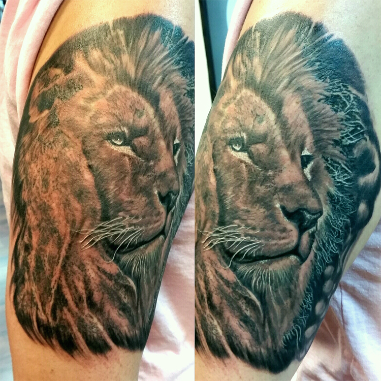 Lion black and grey
