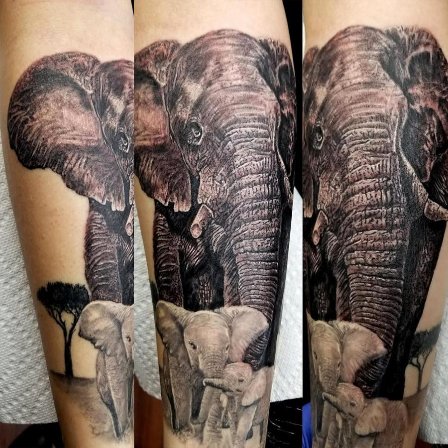 family elephants