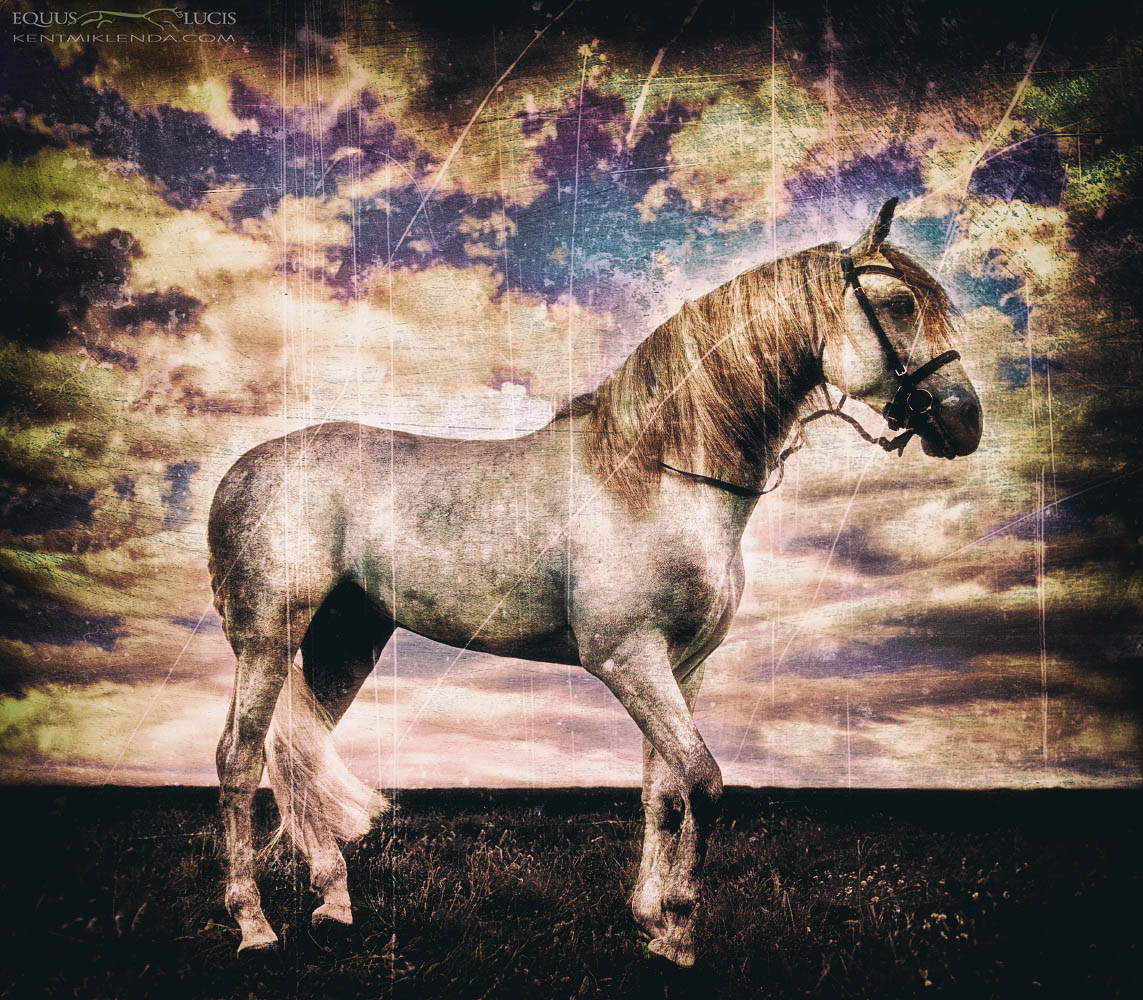 Equus Lucis - Iyesk Andalusion by Kent Miklenda