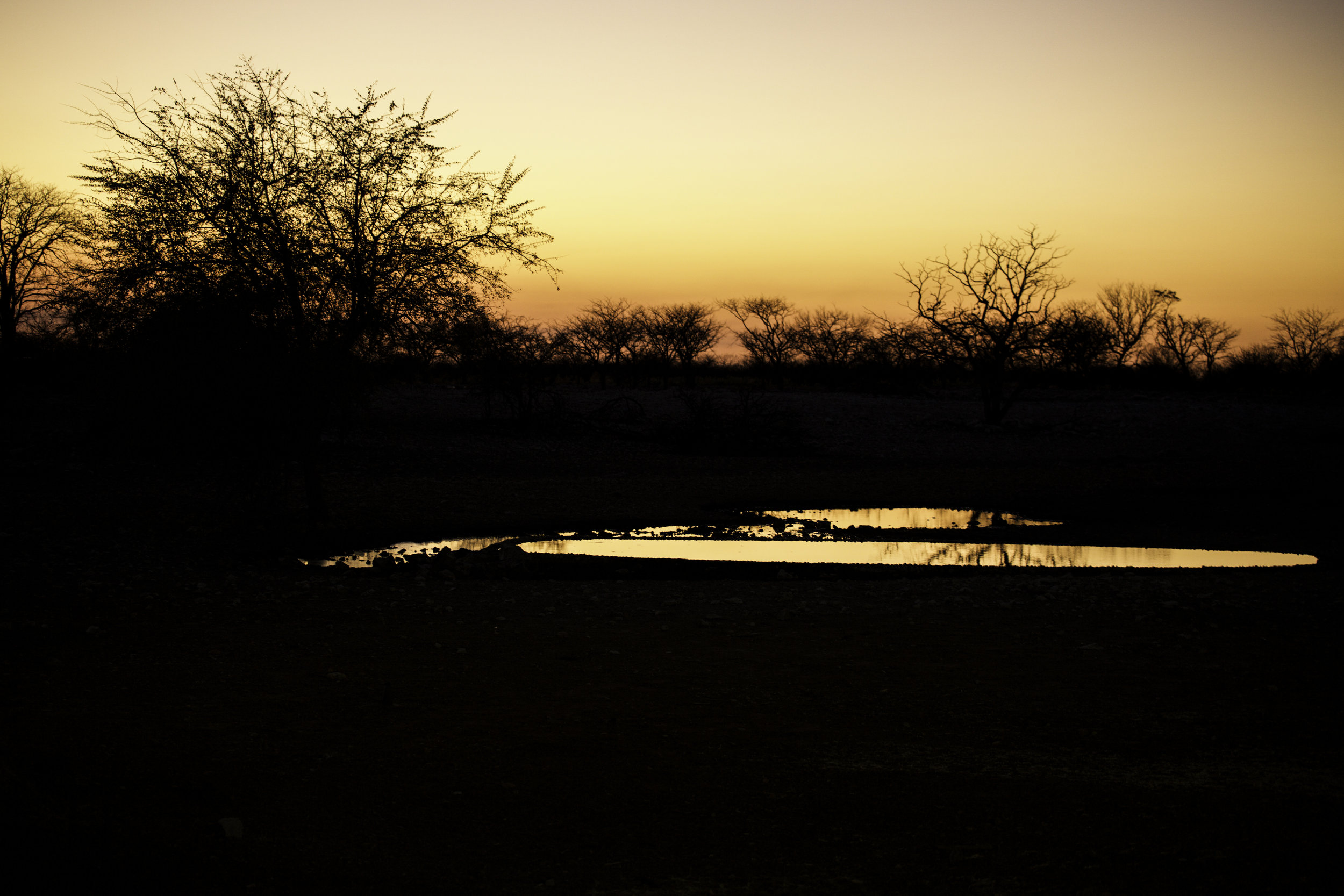 Sunrise at a watering hole.jpg
