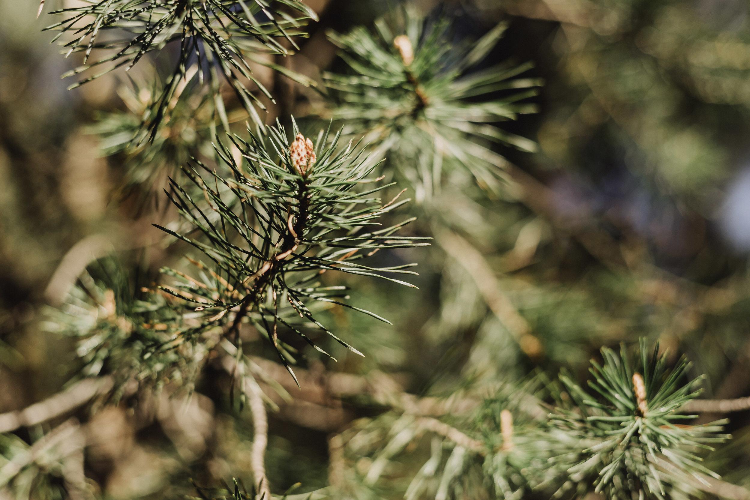 preboda-en- bosque-88.jpg