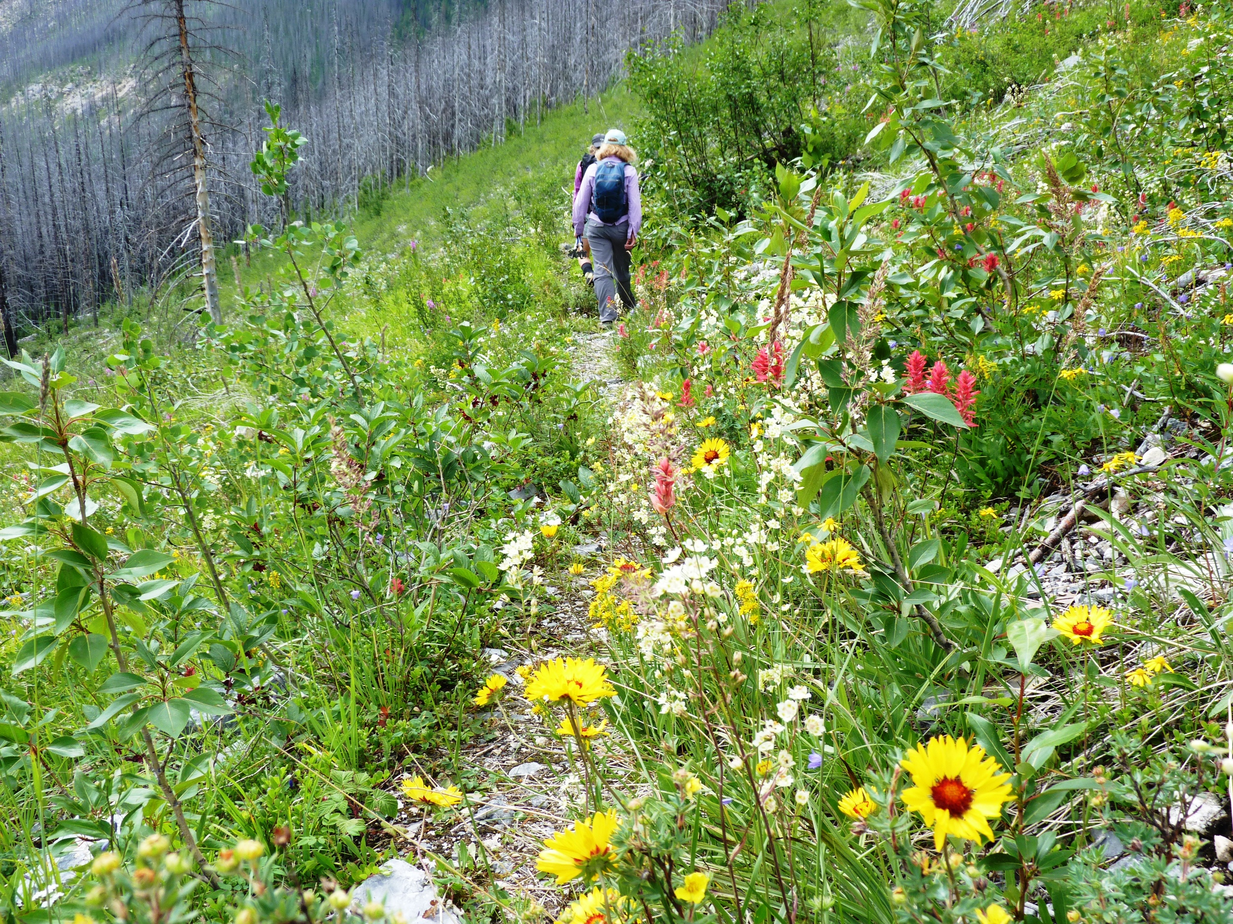 Wildflowers, Kootenay NP