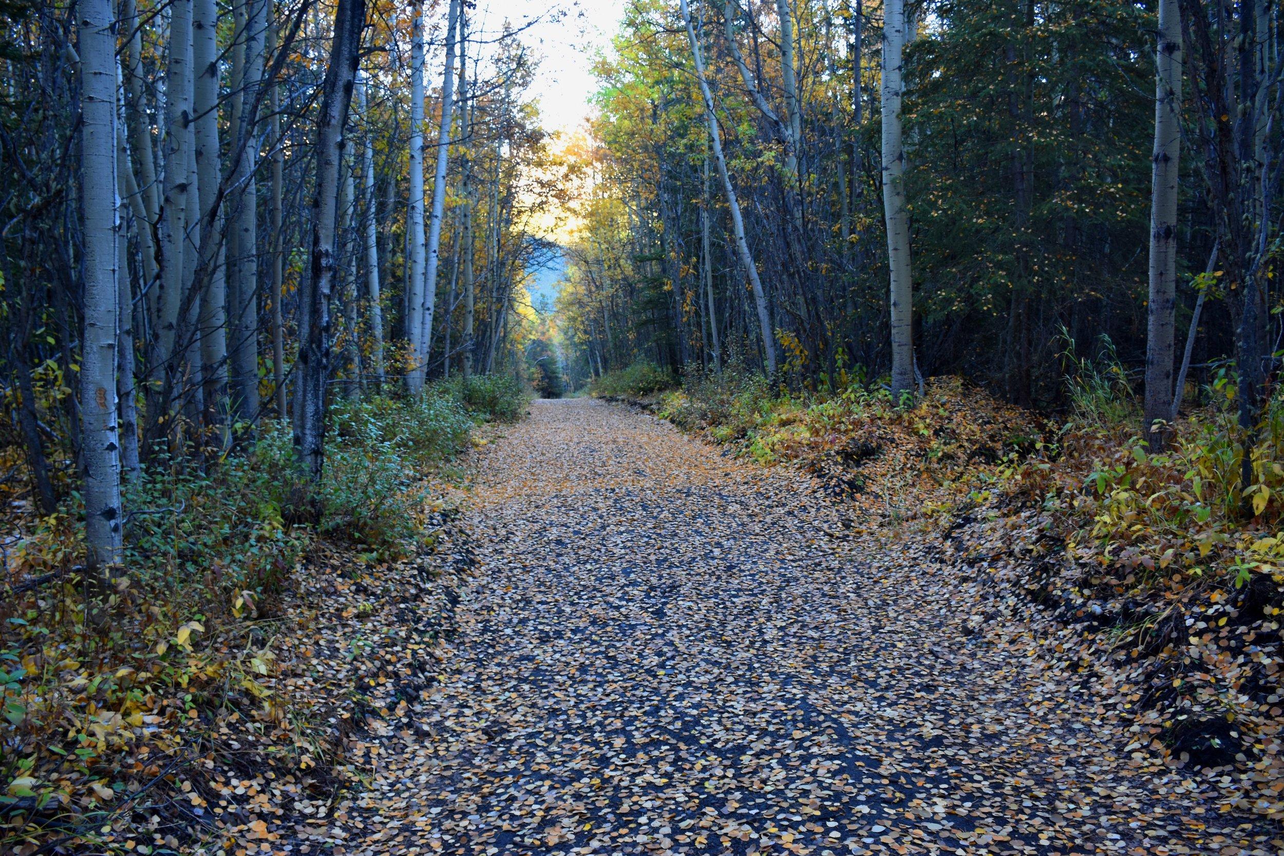 aspen leaf road back at the bottom