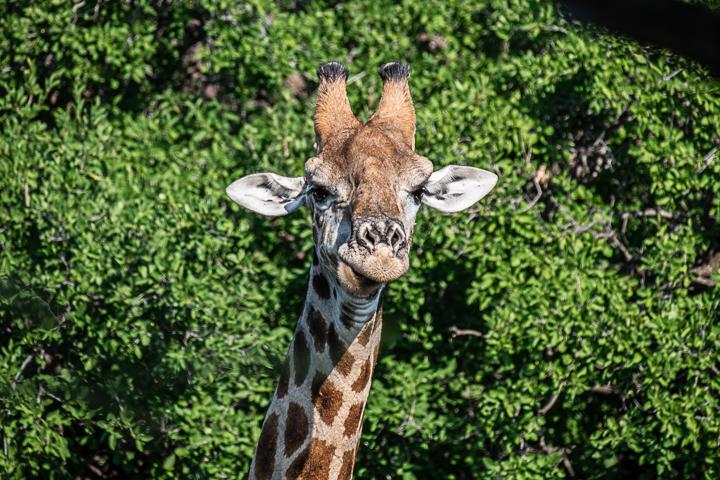 SouthAfrica-BanjoSafari-Feb2019-0041-of-0146-8357.jpg