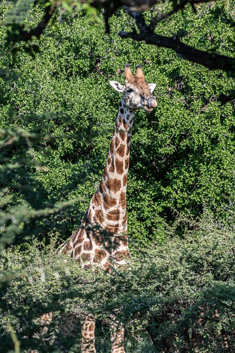 SouthAfrica-BanjoSafari-Feb2019-0042-of-0146-8363.jpg