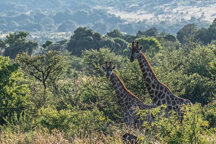 SouthAfrica-BanjoSafari-Feb2019-0074-of-0146-9598.jpg