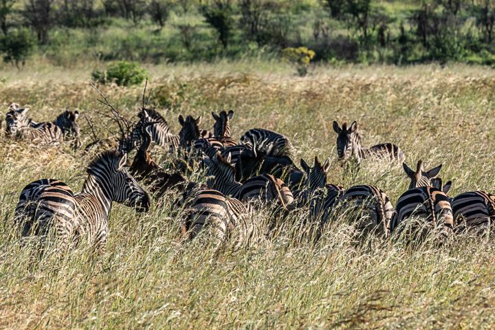 SouthAfrica-BanjoSafari-Feb2019-0076-of-0146-9620.jpg