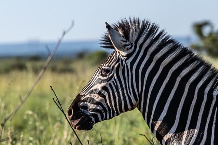 SouthAfrica-BanjoSafari-Feb2019-0100-of-0146-0245.jpg