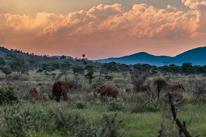 SouthAfrica-BanjoSafari-Feb2019-0128-of-0146-1034.jpg