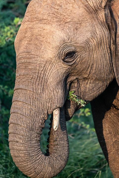 SouthAfrica-BanjoSafari-Feb2019-0136-of-0146-1400.jpg