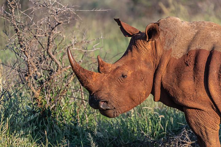 SouthAfrica-BanjoSafari-Feb2019-0142-of-0146-1482.jpg