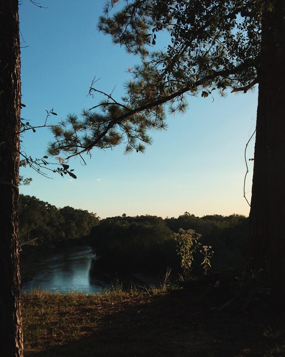 Submitted by:  jessicahillphotography   Location:  Tangipahoa River   Scenic Louisiana