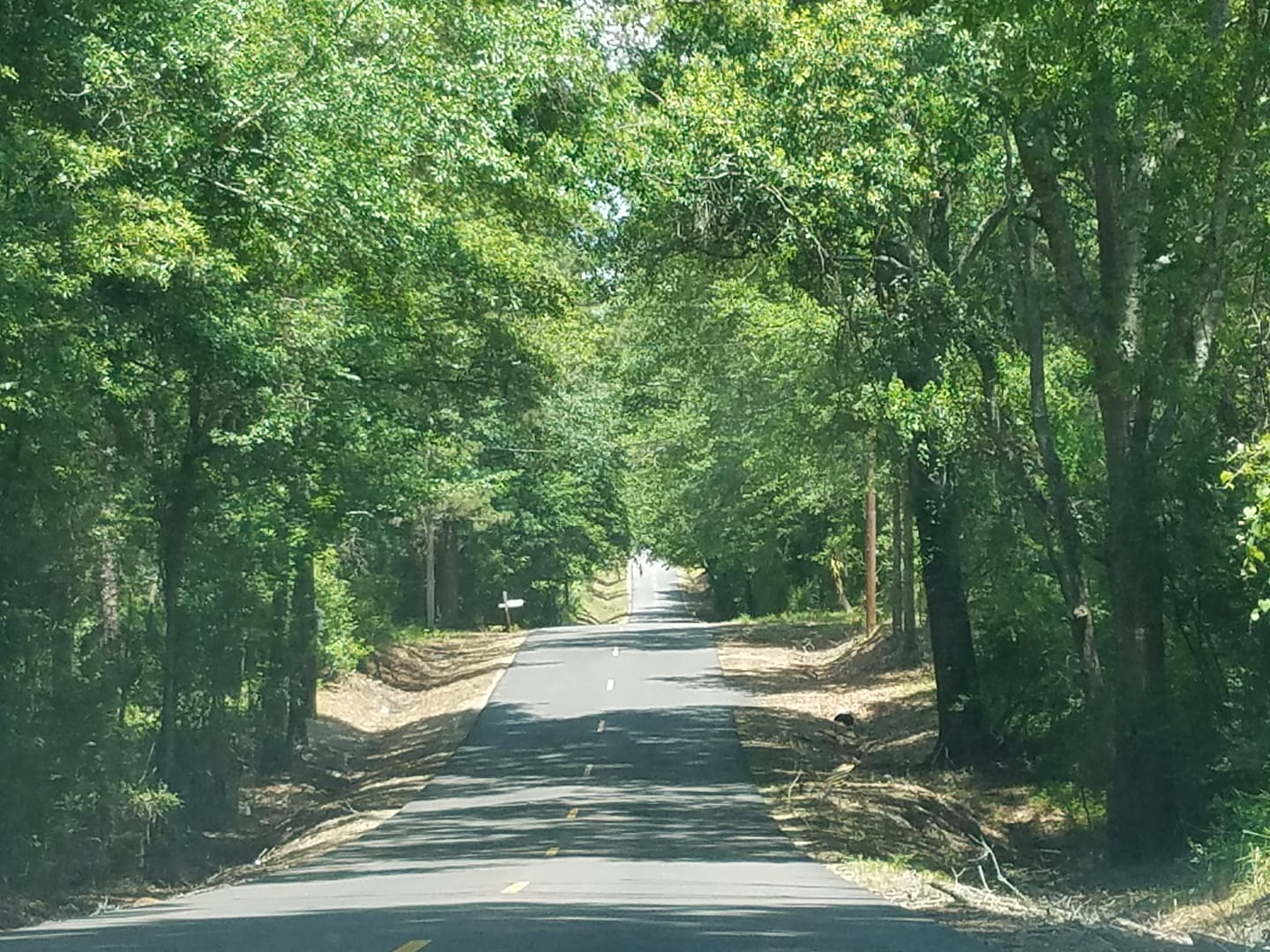 Submitted by:  Sammy Trombatore   Location:  Amite, Louisiana   Scenic drive on Graham Road in Amite.