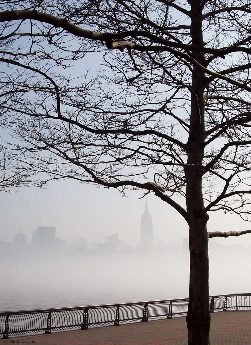 New York Skyline Silhouette with Tree, 2008