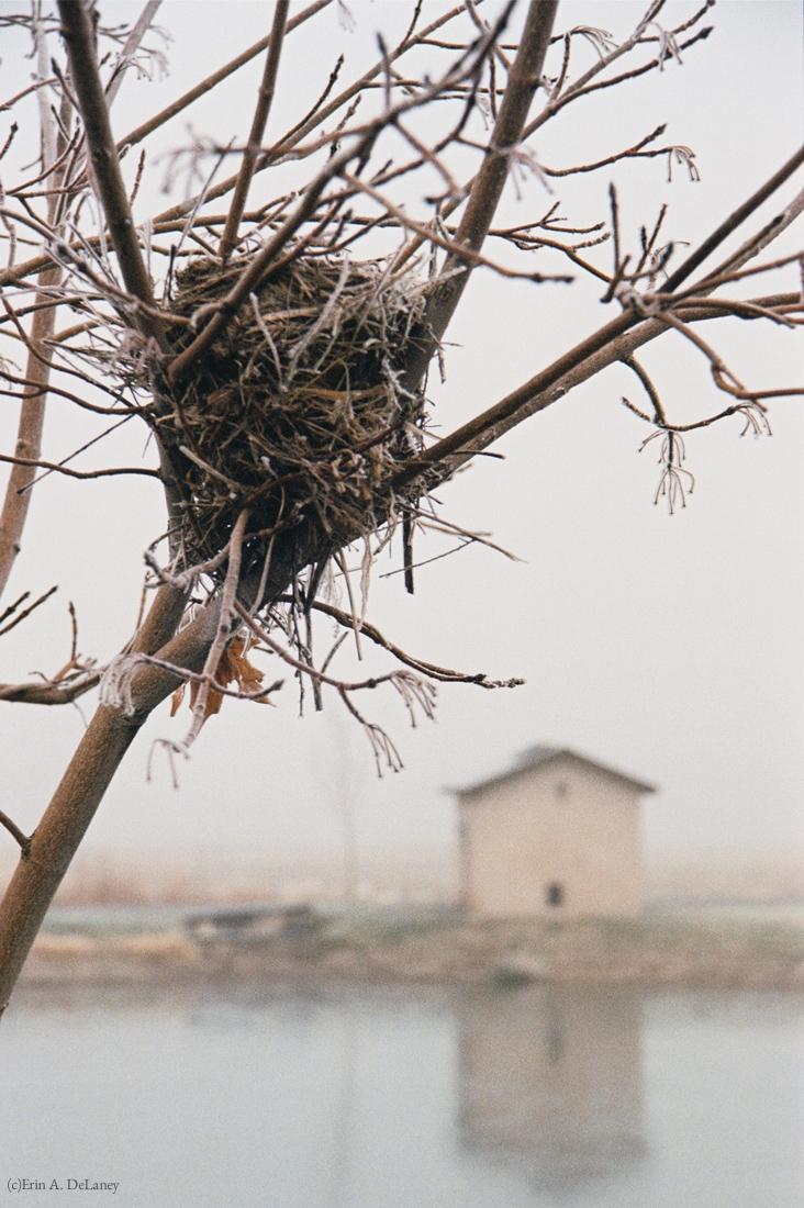 Bird's Nest Home, 2001
