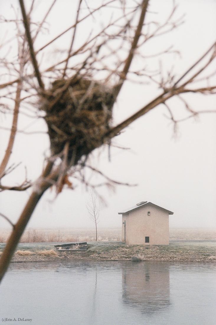 Home Bird's Nest, 2001