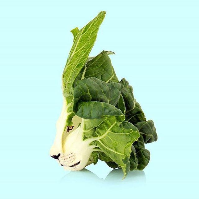 King of the salad🦁💚🥗 by @les.creatonautes via @popmyeyes #lion #lettuce #veganart #neverleather #neverfur #veganfashion @fruitenveg