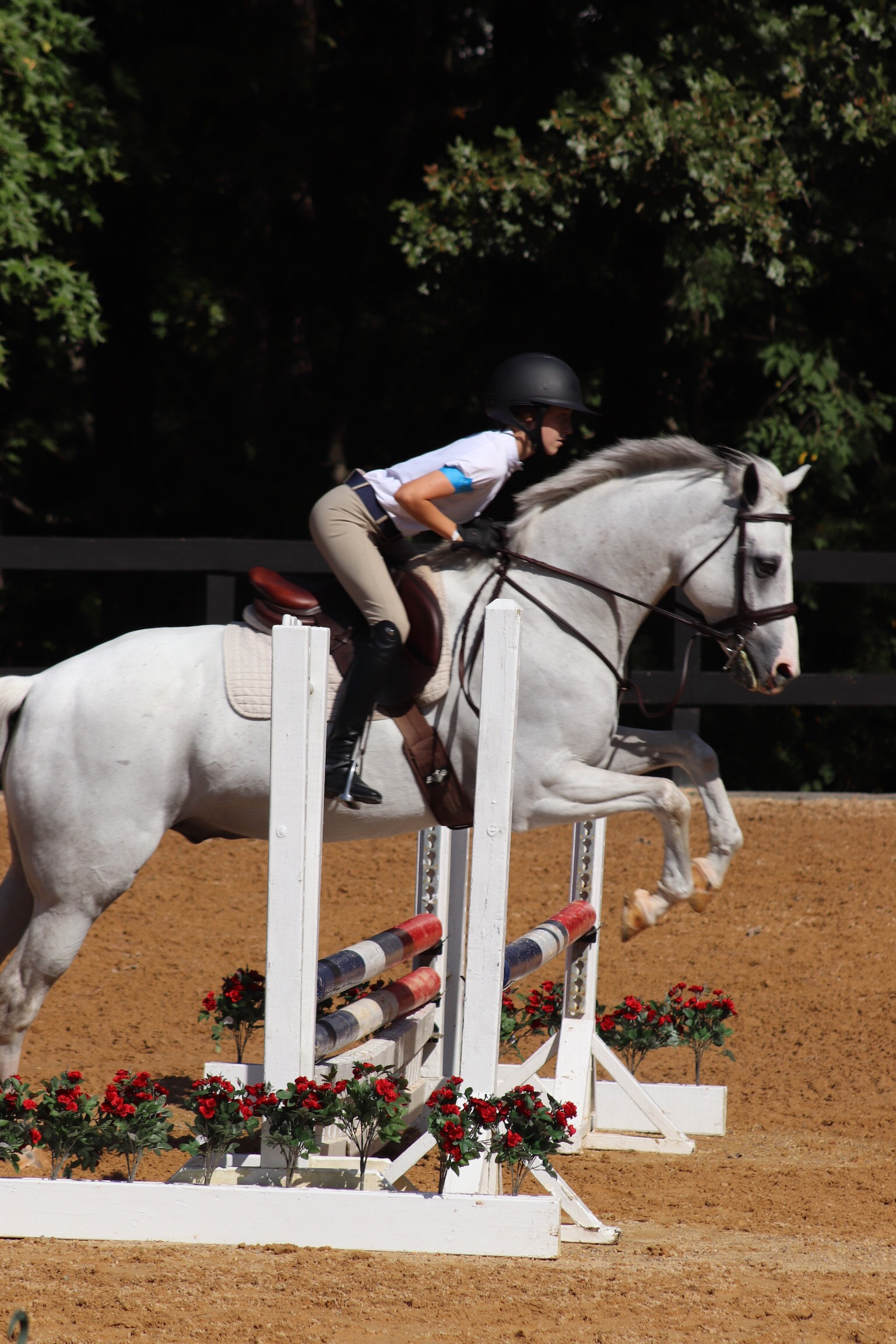 "Julia and ""Otis"" had a great time jumping around the .75 classes!"