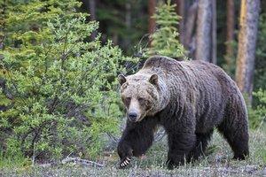 Tourism_Canmore_Kananaskis_-_Wildlife-8.jpg