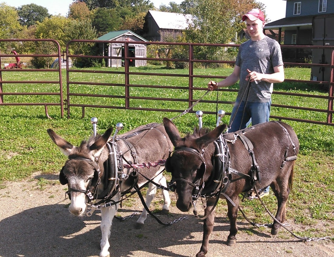 Dan and donkeys practicing as a team
