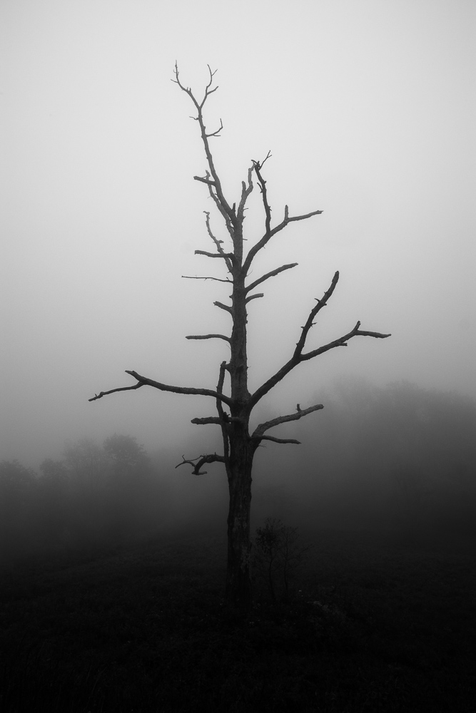 Fortunately, the lone dead tree that caught my eye as we drove past that particular overlook still stood out.