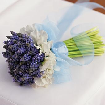 RNW- Hyacinth.jpg