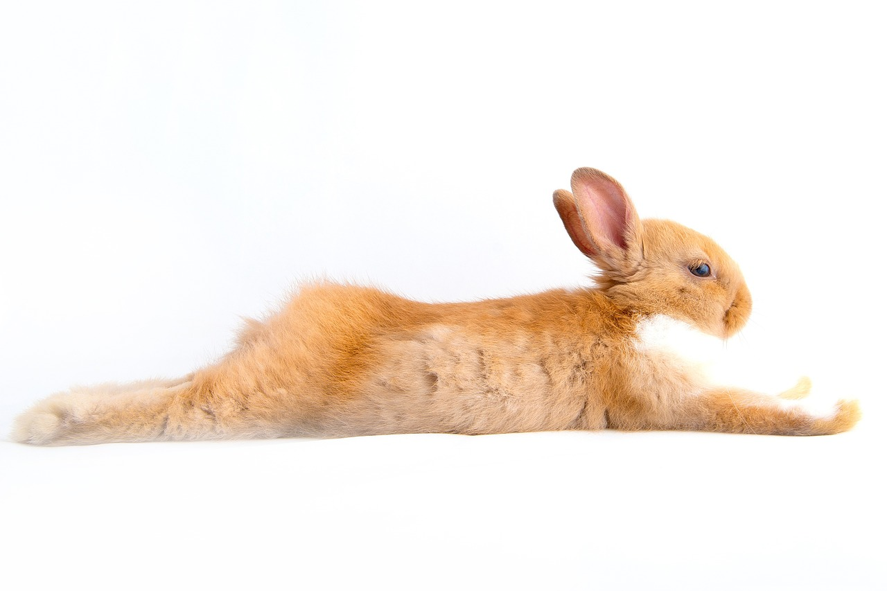 Now here's a bunny who knows how to relax.