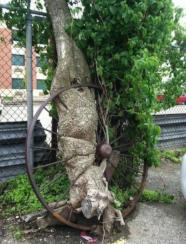 Tree wheel.png
