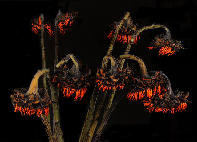 """If your beloved meets a tragic end, don't forget to  put flowers on her grave . Photo:  """"Dead Flowers""""  by  Bill Gracey ."""