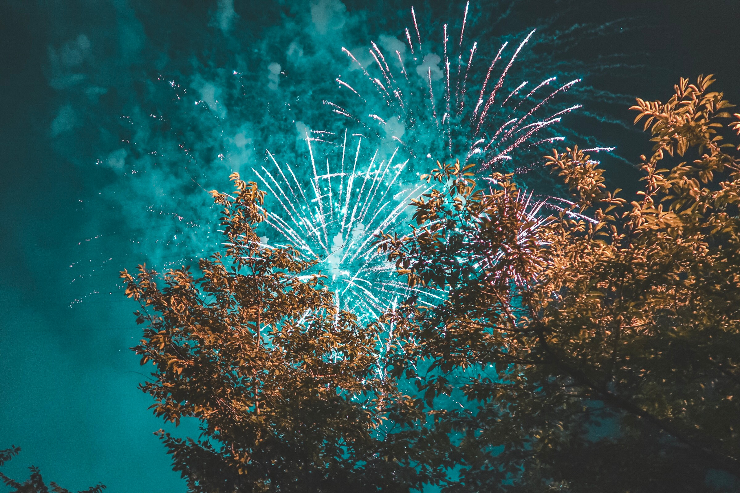 Photo of fireworks behind tree, turquoise sky. Photo by  Julie Tupas  on  Unsplash