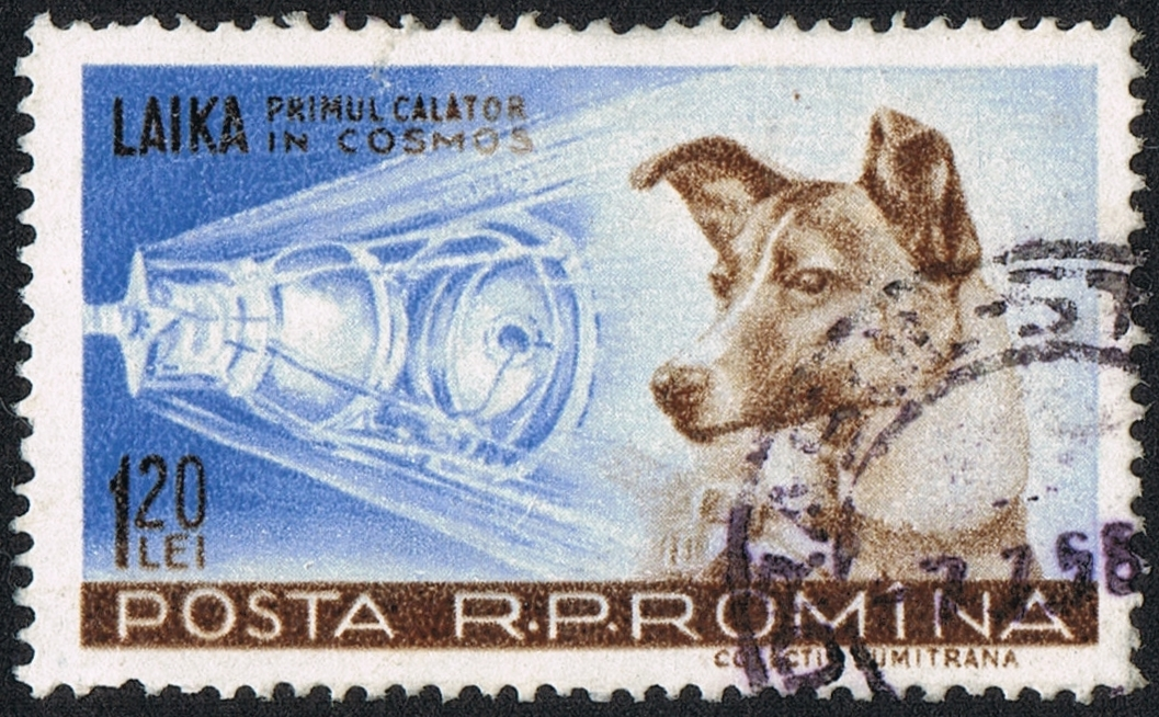 "Romanian  stamp from 1959 with Laika (the caption reads ""Laika, first traveller into Cosmos"") By scanned by user Neozoon,  Public Domain"