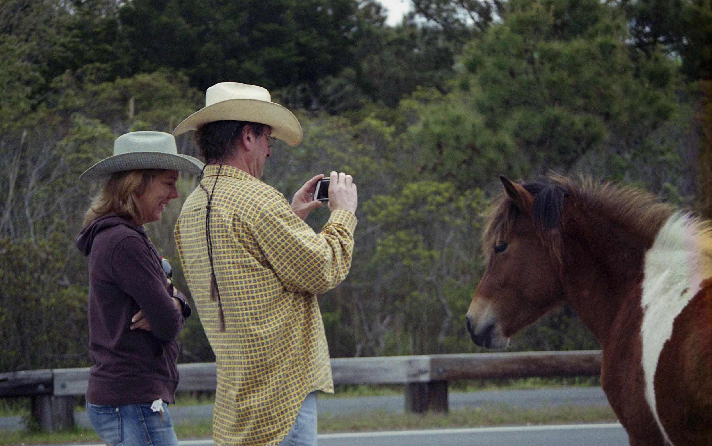 pony14.jpg