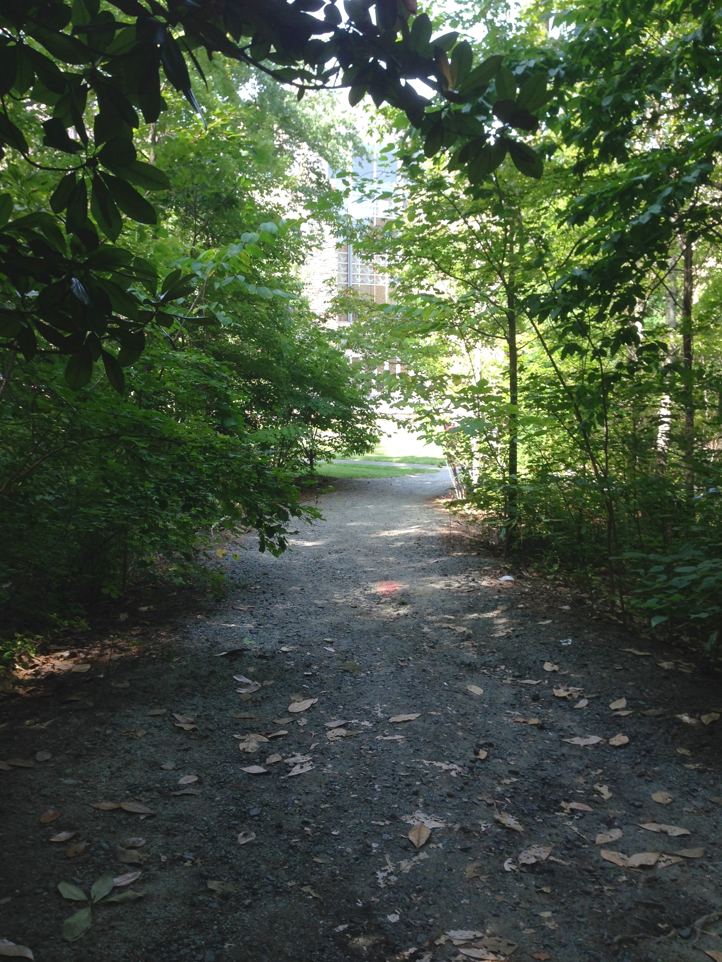 duke: forested trails on campus