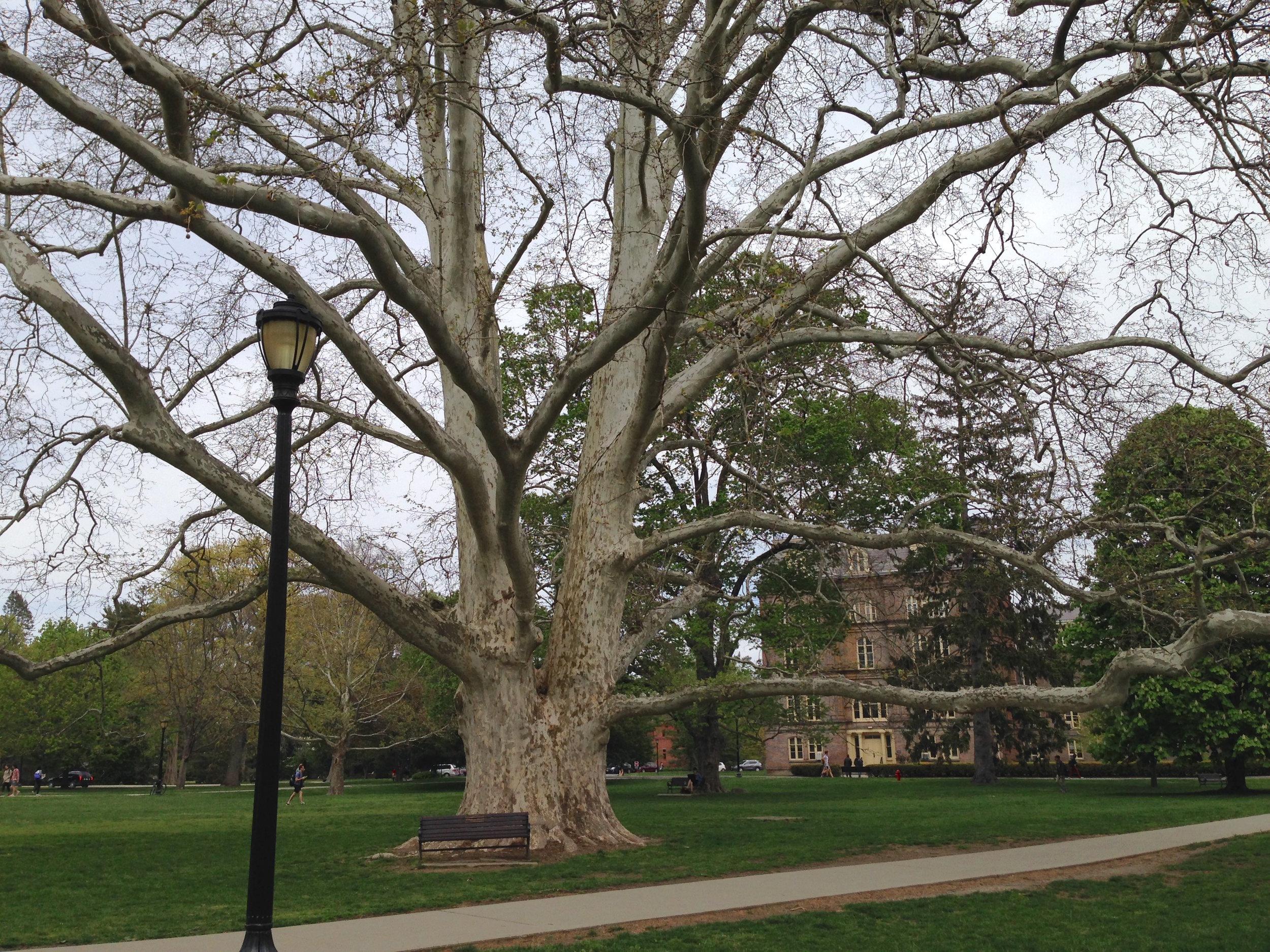 vassar's quad tree