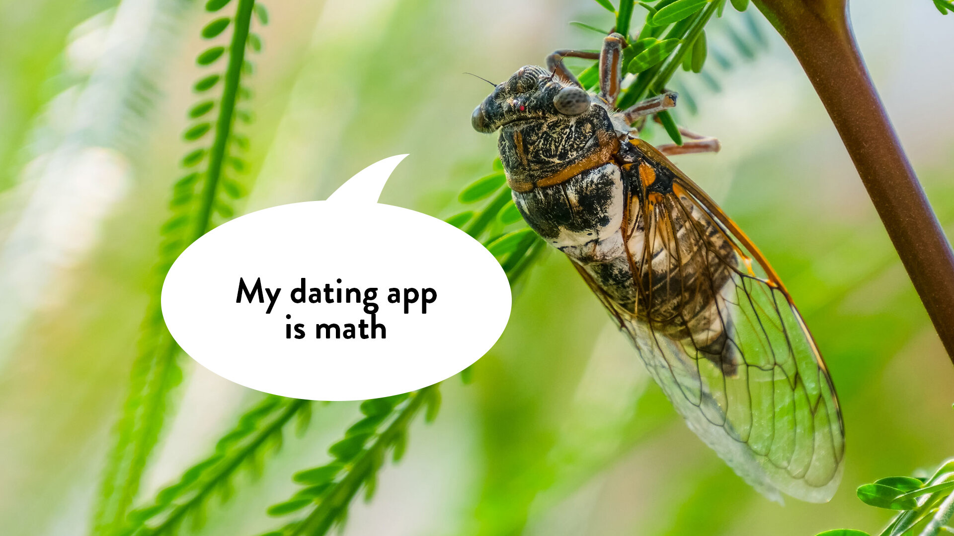 44: Cicadas use prime numbers as an evolutionary strategy:  https://www.youtube.com/watch?v=tjLiWy2nT7U