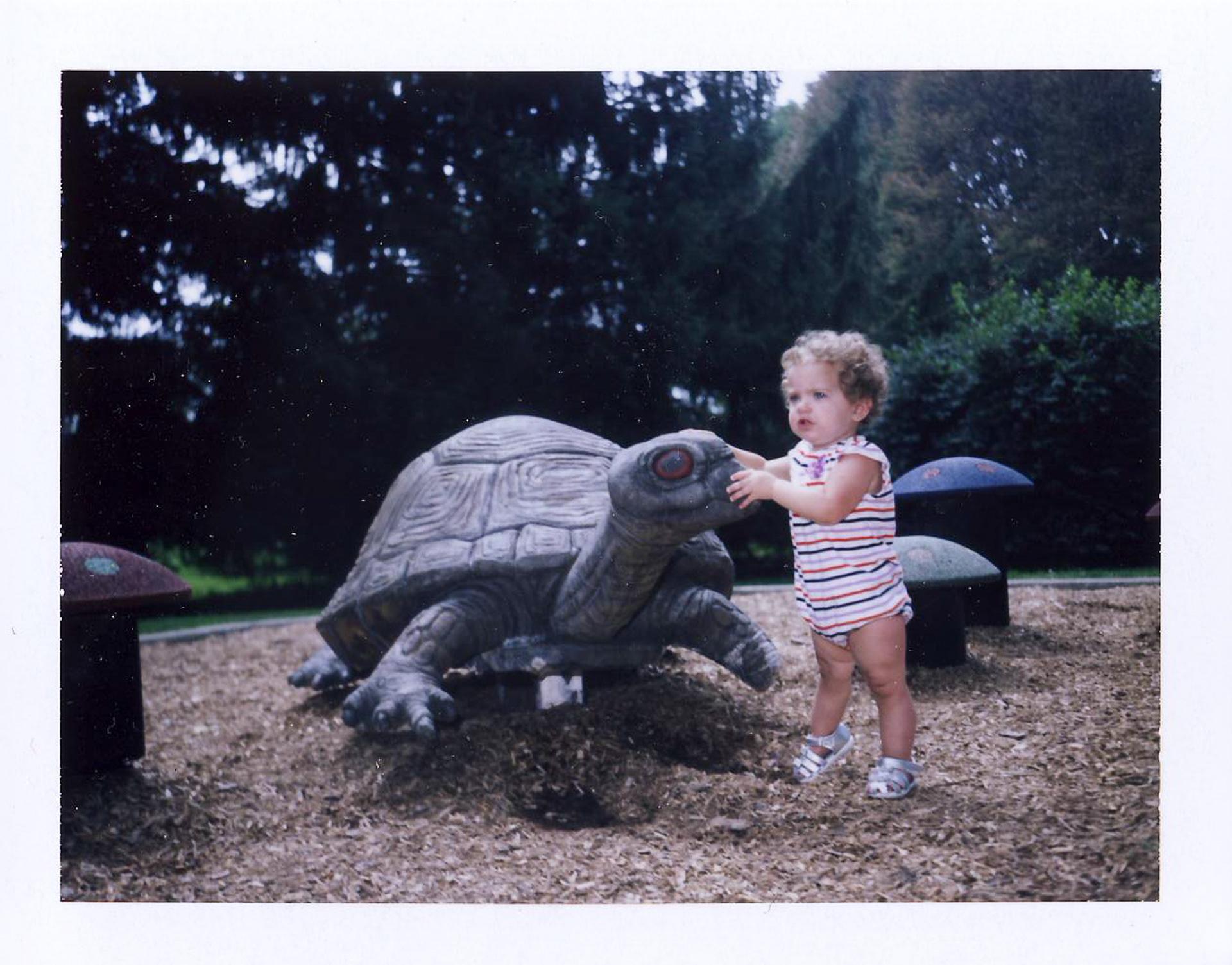 Olive's Turtle