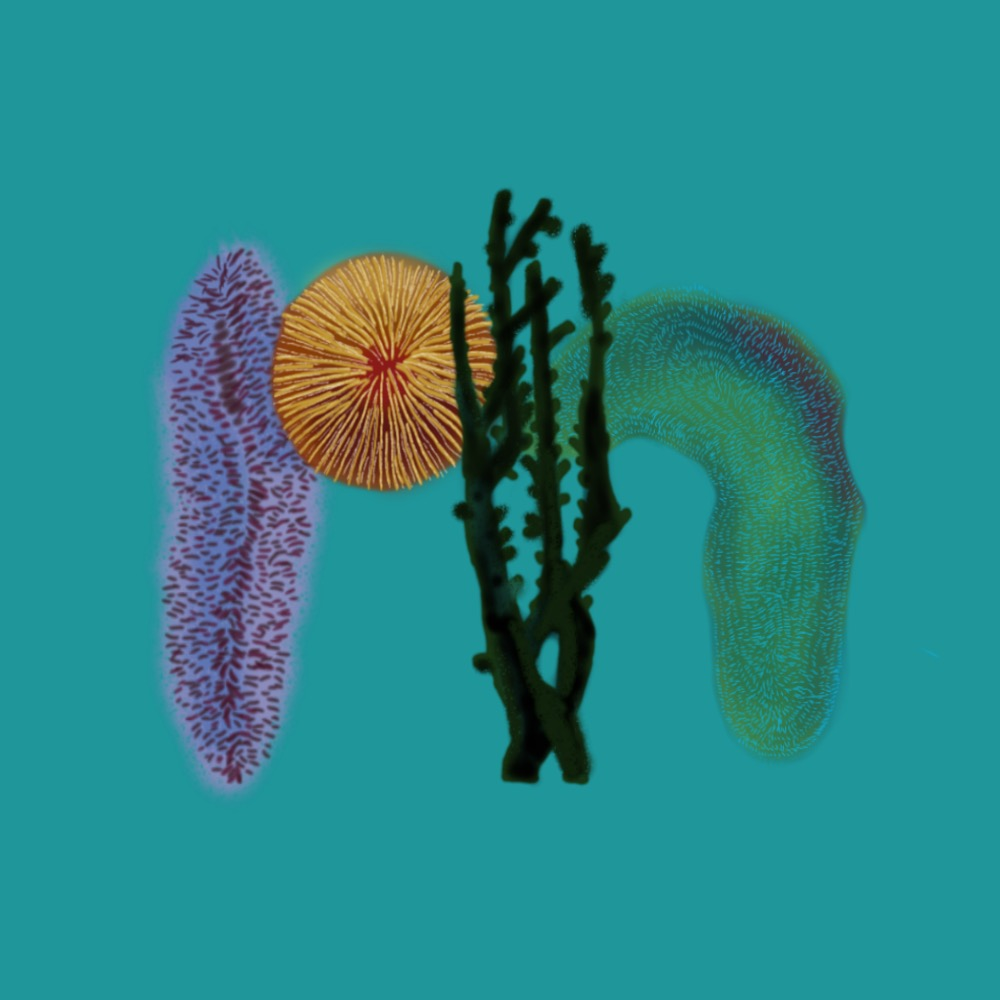 🧽 M for Mole Coral, Mushroom Coral & Midnight Coral (& another Mole Coral) 🌑