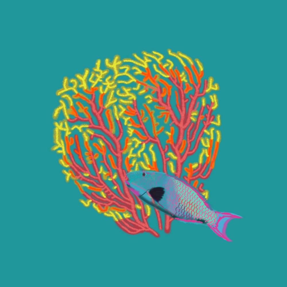 👑Q for a quality Gorgonian Sea Fan Coral & Queen Parrotfish 🦜