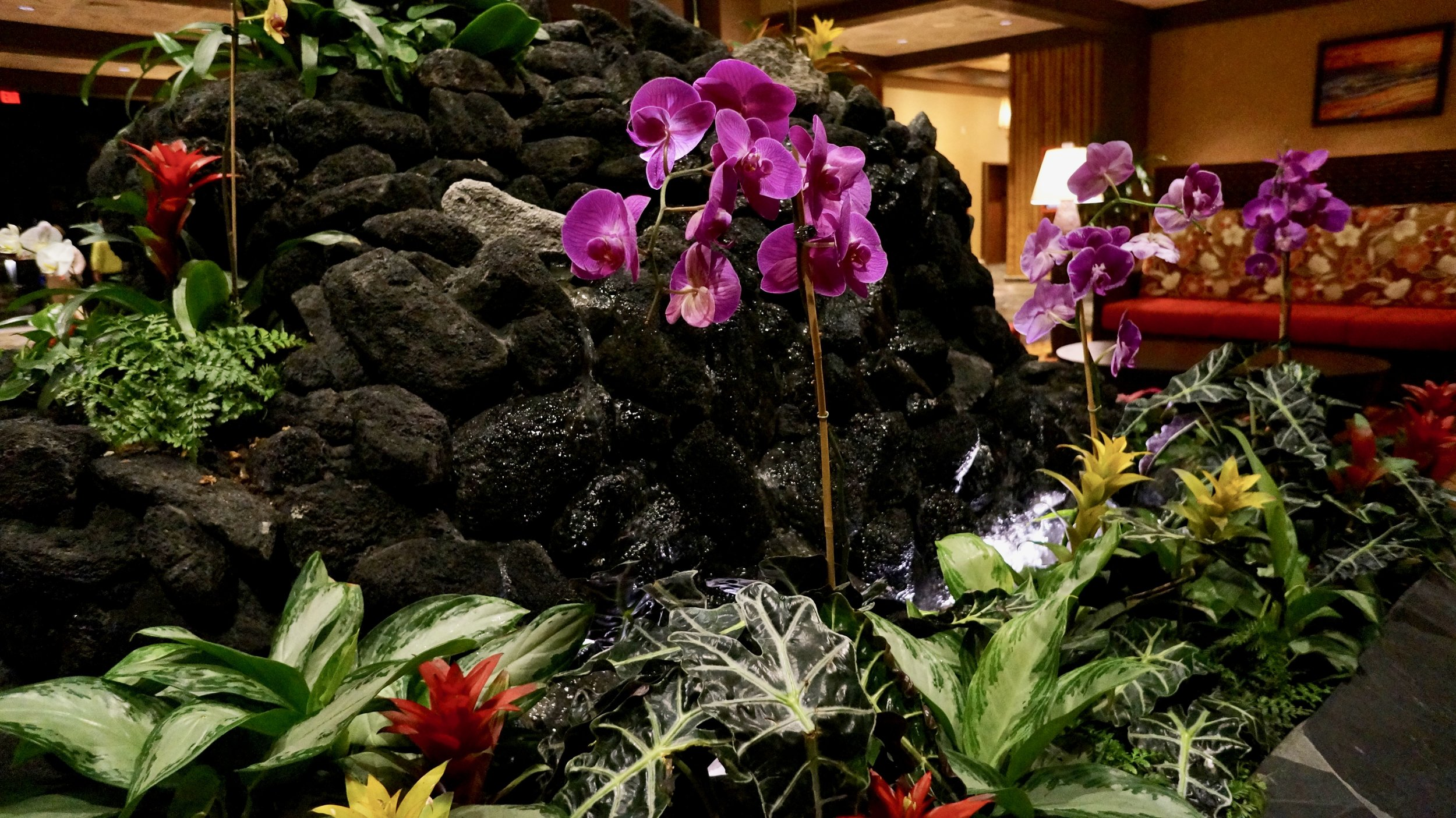 polynesian-fountain-orchids.jpg
