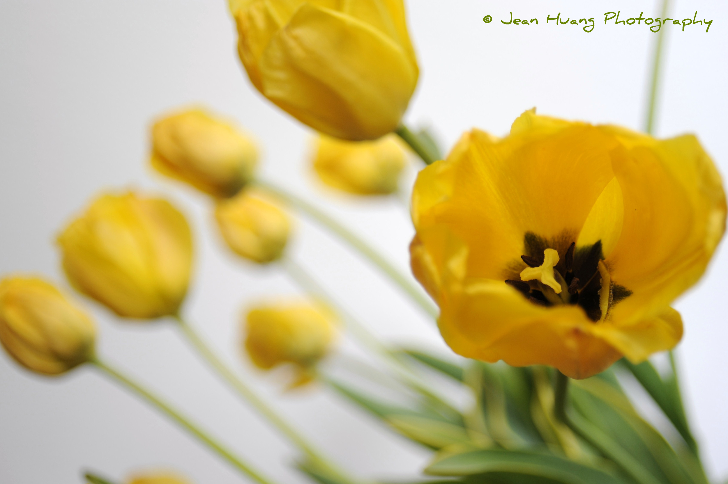 Jean Huang Photography - © Jean (Jiaying) Huang, All Rights Reserved