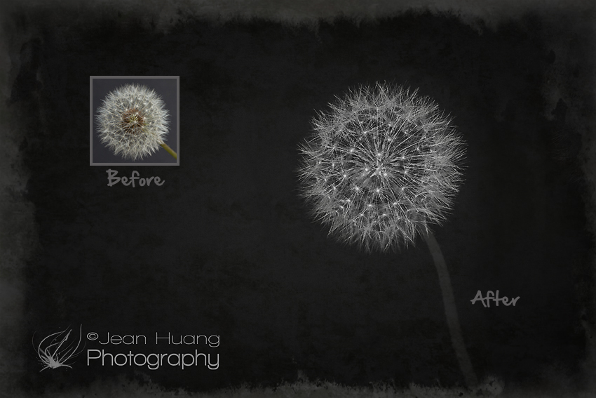 """Transformation"" of a Dandelion - ©Jean Huang Photography"