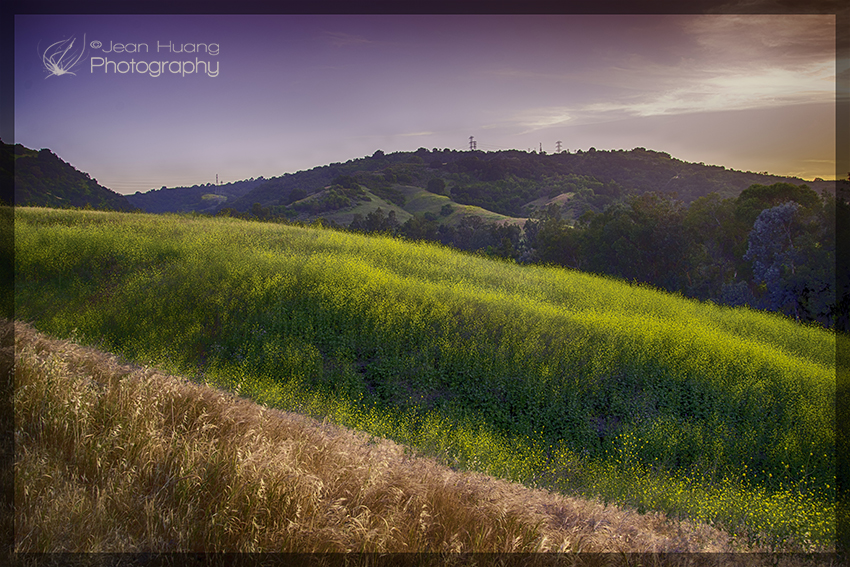 Spring flower and fall grass co-exist - ©Jean Huang Photography