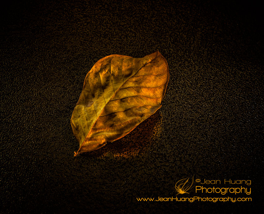 "A-leaf-in-its-""golden-years""-jean-huang-photography-copyright-jean-huang-photography"