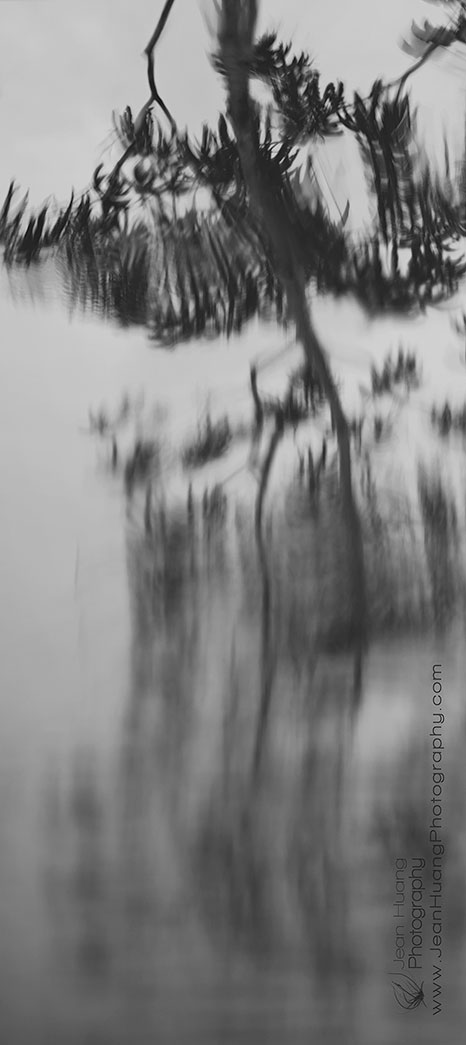 Dance-of-Tree-Reflection-Amazon-Natural-Park-Amazon-Peru-Copyright-Jean-Huang-Photography