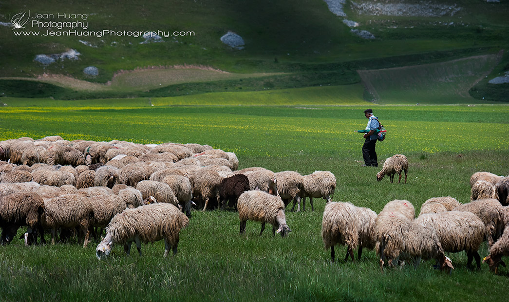 Shepherd-and-His-Sheep-Castelluccio-di-Norcia-Umbria-Italy-Copyright-Jean-Huang-Photography