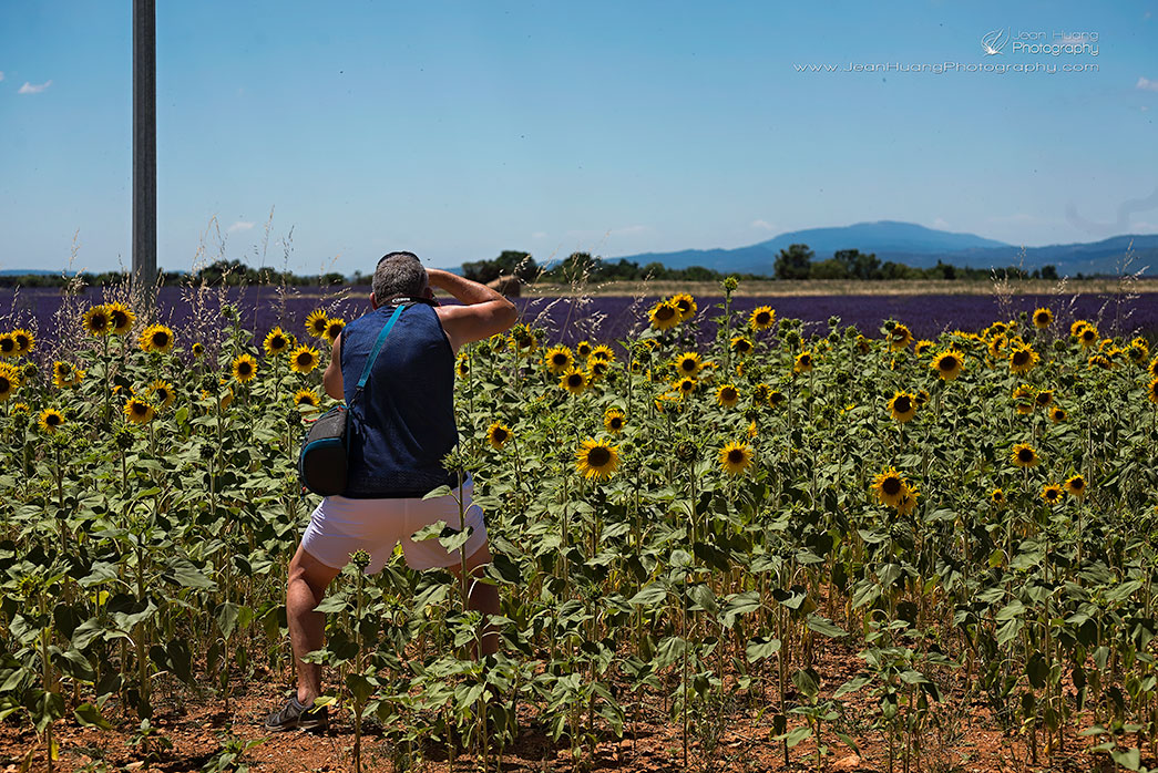 Male-Tourist-Taking-the-Killing-Shot-Valensole-Provence-France-Copyright-Jean-Huang-Photography
