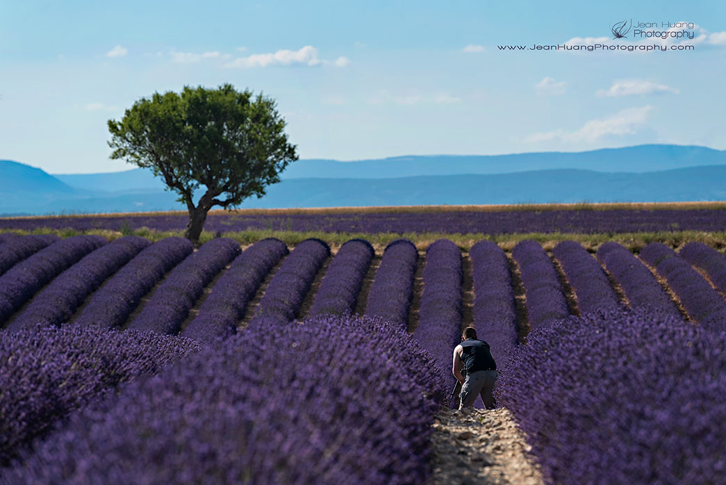 Photographing-in-Lavender-Field-Valensole-Provence-France-Copyright-Jean-Huang-Photography